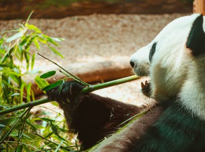 Out with the plastic straws, in with the bamboo.